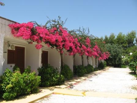 20_villaggio-poseidone_villaggio_hotel_poseidone_viale_bungalow.jpg