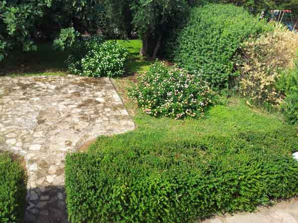 240_villetta-degli-ulivi-porto-cesareo_giardino_villetta_ulivi.jpg
