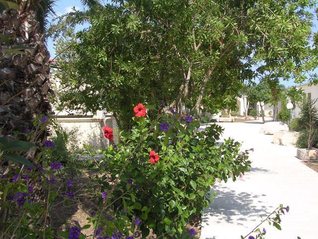 421_residence-a-frassanito-la-pineta-otranto_giardino.jpg
