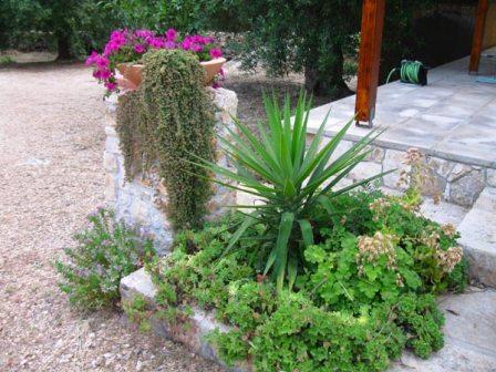 435_trullo-clara-tra-marina-di-mancaversa-e-torre-suda_piante-ornamentali.jpg