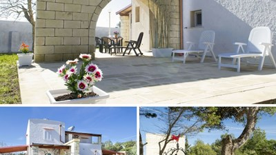 506_villa-le-ginestre_le_ginestre_giardino.jpg